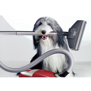Small dog holding a vacuum cleaner part