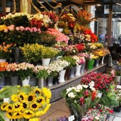 Flower display at a florist shop