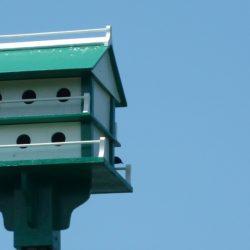 Birdhouse condo style