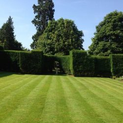 Beautiful lawncare maintenance